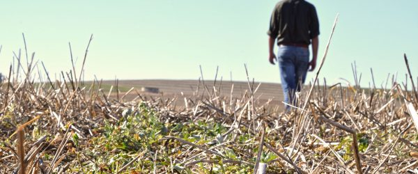 Farmer walking away from harvested, dried out crops